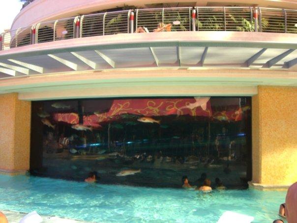 The Golden Nugget shark tank