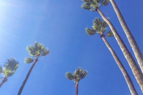 california palm trees blue skies