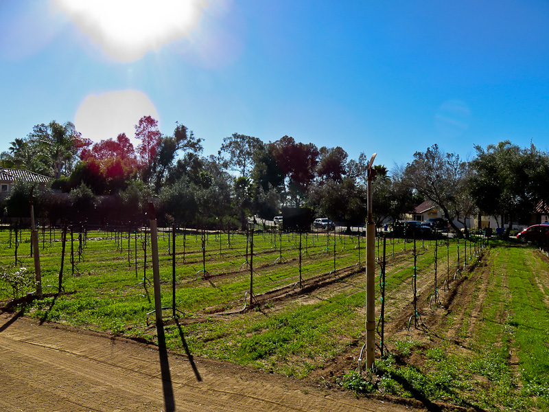 Getting Drunk in the Sun on a San Diego Wine Tour - Aussie on the Road
