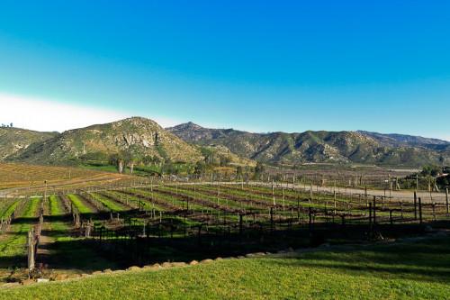 orfila winery san diego 2