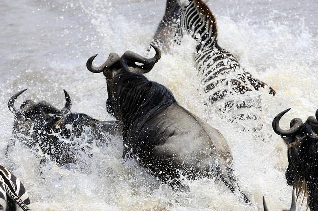 mara river crossing tanzania kenya